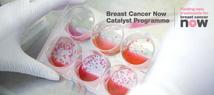 Breast Cancer Now Catalyst Programme Grants